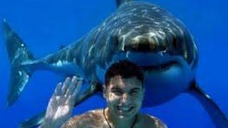 Shark Attack Video 2015