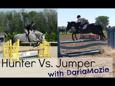 Hunter Vs Jumper | Riding Style & Rules