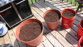 Does size matter? Growing tomatoes and making your own compost