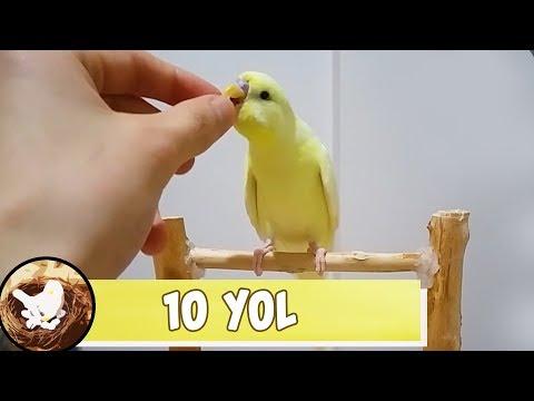 Muhabbet Kuşu Sizi Sevmesinin 10 Yolu