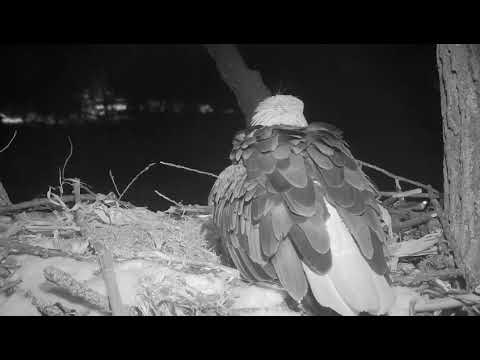 Decorah Eagles  Mom Labouring and  Lays Her First Egg 2/22/19