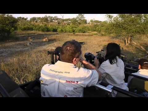 Londolozi Specialist Wildlife Photographic Safaris
