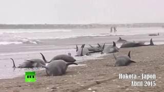 el hombre esta destruyendo el planeta (video de reflexion)