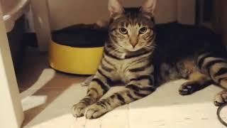 Кот охотник. По имени Влад.