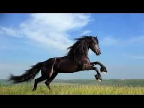 Horse Wallpaper YouTube