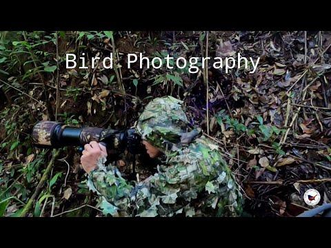 ถ่ายภาพนก, Birds photography, Bird of Inthanon, Inthanon bird trip