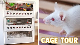 Triple Level Mouse Cage Tour & Upgrades | The Test Tube 2020