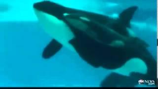 Самка Кита родила океанариуме