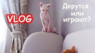 VLOG Коты дерутся. Костя привёз Настю и Алису