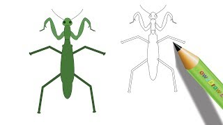 How to Draw a Praying Mantis Easy Drawing – Coloring Page