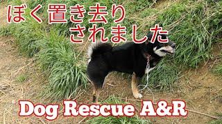 【関連動画】 夜逃げ!?置き去りにされた柴犬 噛みます!Dog Rescue A&...