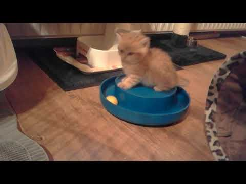 Happy kittens playing :)