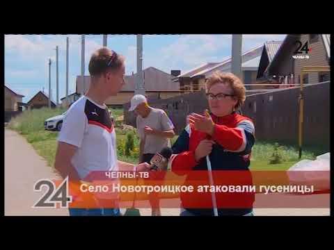 Село Новотроицкое атаковали гусеницы