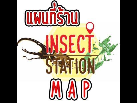 แนะนำ เส้นทาง แผนที่ร้าน Insect Station จตุจักร