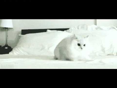 Yakety Cat