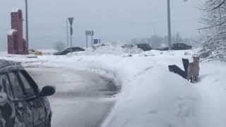 Псы-охотники атакуют машины на окраине Серпухова