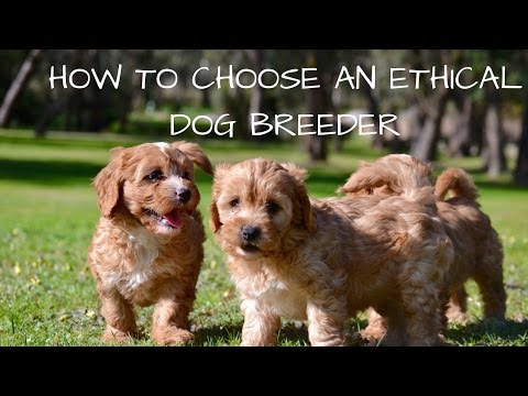 How to choose an ethical dog breeder