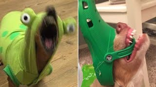 Funny Animal Videos that Radiate Extreme Chaotic Energy