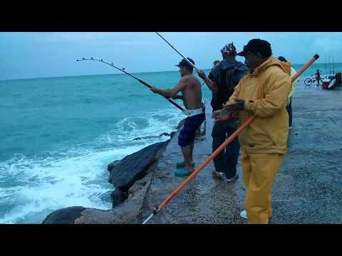 Pesca de tiburon en Bal Harbour Fl.