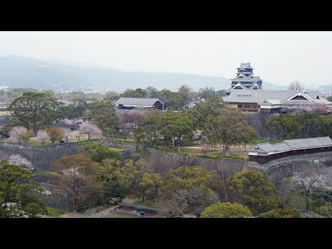 [ 4K Ultra HD ] 熊本城と桜 Kumamoto Castle surrounded by Cherry Blossoms (Shot on RED EPIC)
