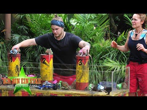 Dschungelcamp 2019   Manege frei für Felix und Doreen bei der Dschungelprüfung