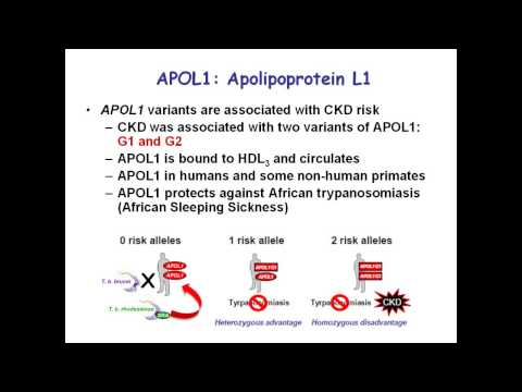 APOL1 Gene and African-American Susceptibility to Chronic Kidney Disease by John Sedor, MD