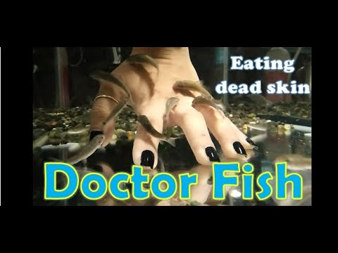 DOCTOR FISH | (GARRA RUFA) | FISH SPA THERAPY | FISH PEDICURE