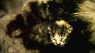 Слепые котята с мамкой