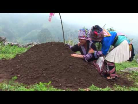 Tuag Hlub A Hmong New Movie 2014 By Ling Lee From China 苗族新电影预告片 (死。爱)