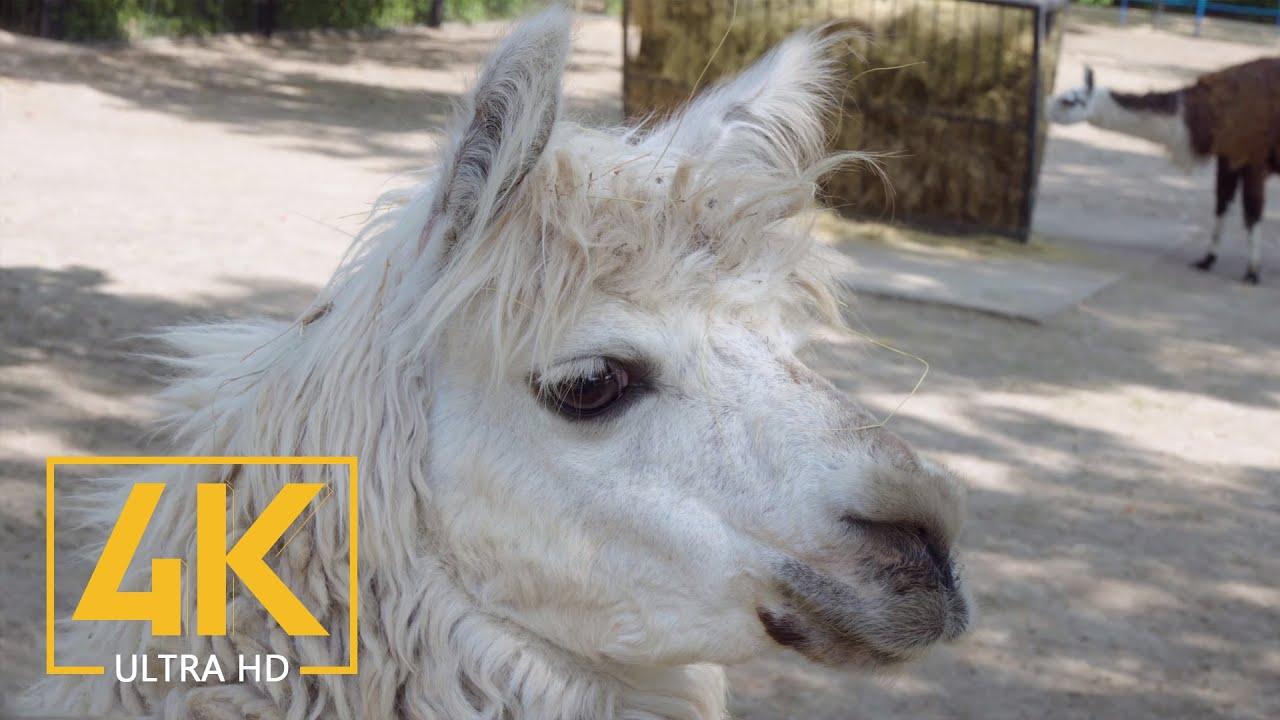 4K Animals, Ukraine - Travel Journal