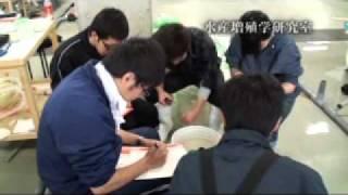 東京農業大学 ホッカイエビの成育比較調査 「水産増殖学研究室」