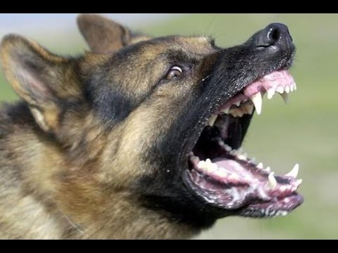 how to not get angry and frustrated at your dog
