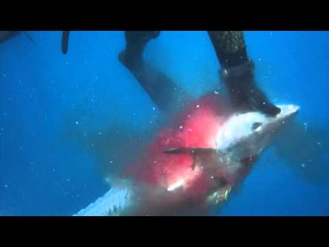 Spearfishing Exmouth - One breath in the North West, Part 1 of 3