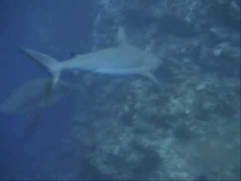 Palau Ulong Channel Dive 2008 mdwdiver
