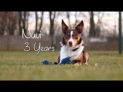 Nuvi ♥ Border Collie ♥ 3 years together ♥