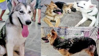 Pet Dog Market in Streets of Riyadh- Saudi Arabia is also known as birds or animals market