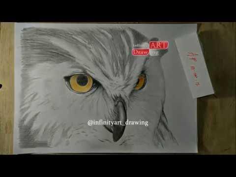 How To Draw Owl With Pencil Bagaimana Cara Menggambar Burung
