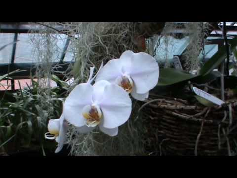 Glasgow Botanic Gardens - Orchids