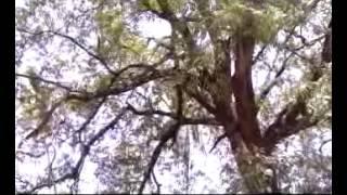 Deshaperuma, Great History of Purangu 2017 Video