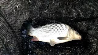 На рыбалке на карпа лето 2020