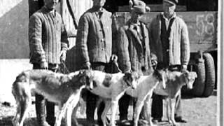 Borzoi 1870 to 2013 (Music - Any Other Name/American Beauty)
