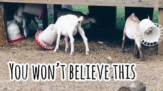 FAIL OF THE DAY | ANIMAL FAILS