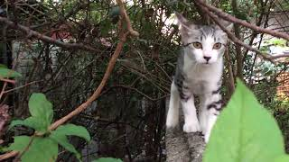 Taro(a smoke and white cat) was running in a hurry so I followed. T...