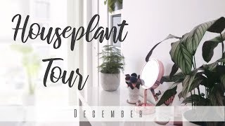 Houseplant Tour! | December 2018