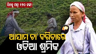 Assam Elections 2021 - OTV Report From Tea Gardens Of Assam