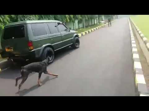 seremm ...yonzikon14sudah memiliki anjing pelacak...