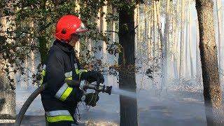 Akcja gaszenia pożaru lasu w okolicach Korzeńska