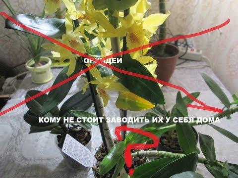 Внимание ! Орхидеи : кому не стоит заводить их у себя дома ?