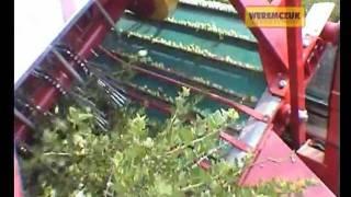 ZBIÓR AGRESTU 2011 - kombajn JOANNA-3 w agreście