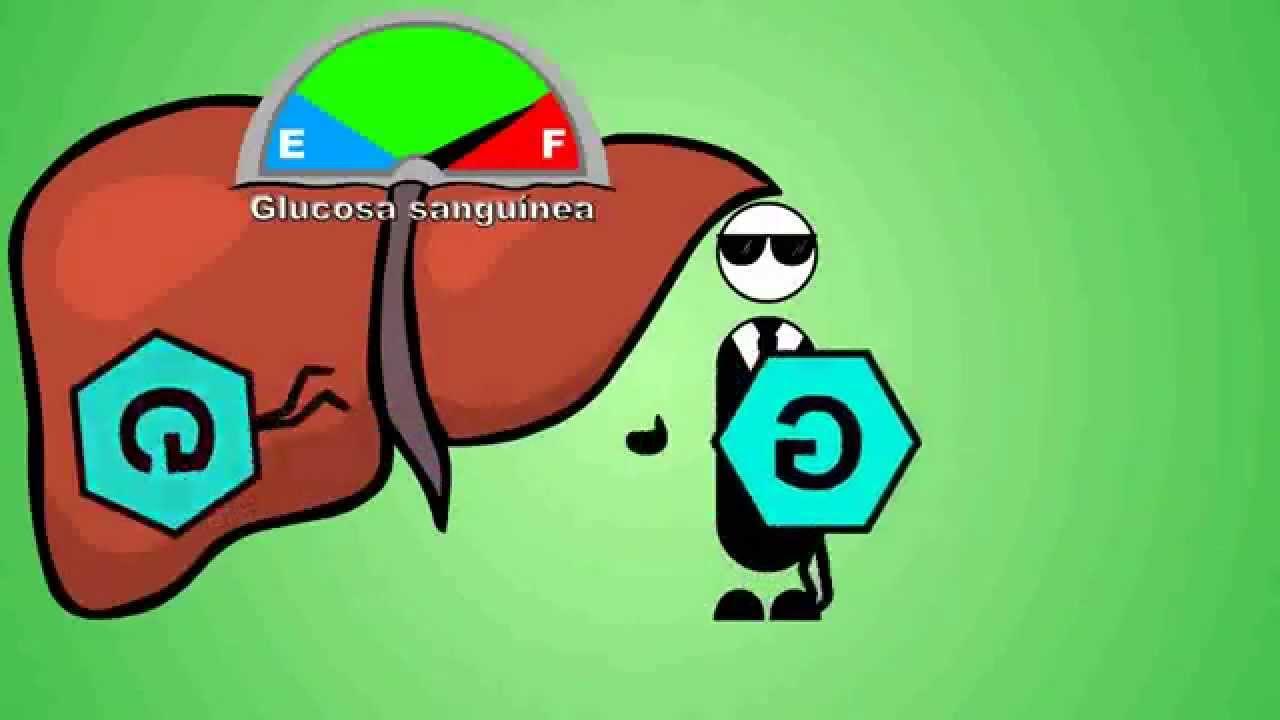 Metabolismo De La Glucosa Video Animado Glucogenesis